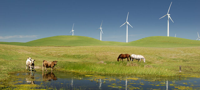 Power Generating Windmills With Livestock
