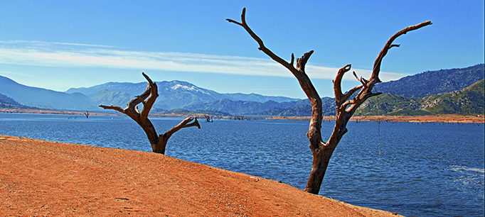 Dead Trees On The Shoreline Of Drought Stricken Lake Isabella