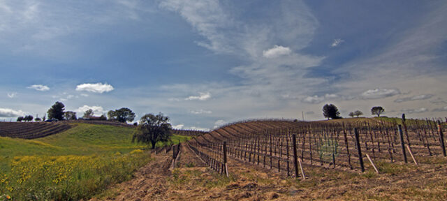 Paso Robles Wine Country Scenery