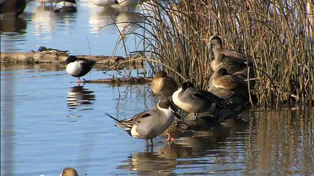 Photo of birds in water