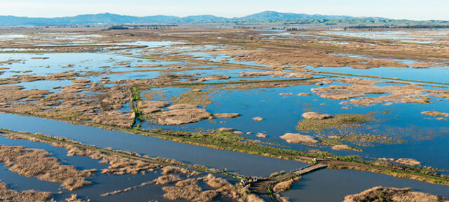 Roaring River levees overtop at Grizzly Island in Solano County, Calif, located in the Sacramento San-Joaquin Delta, January 13, 2017. Florence Low / California Department of Water Resources