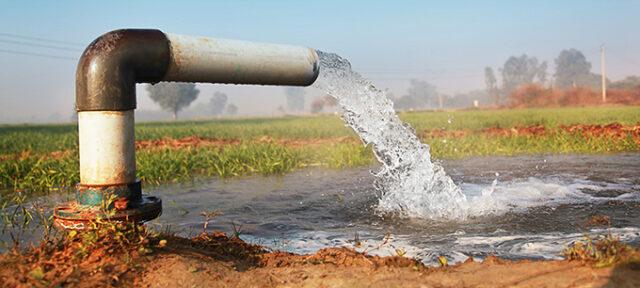 Watering In Wheat Farm