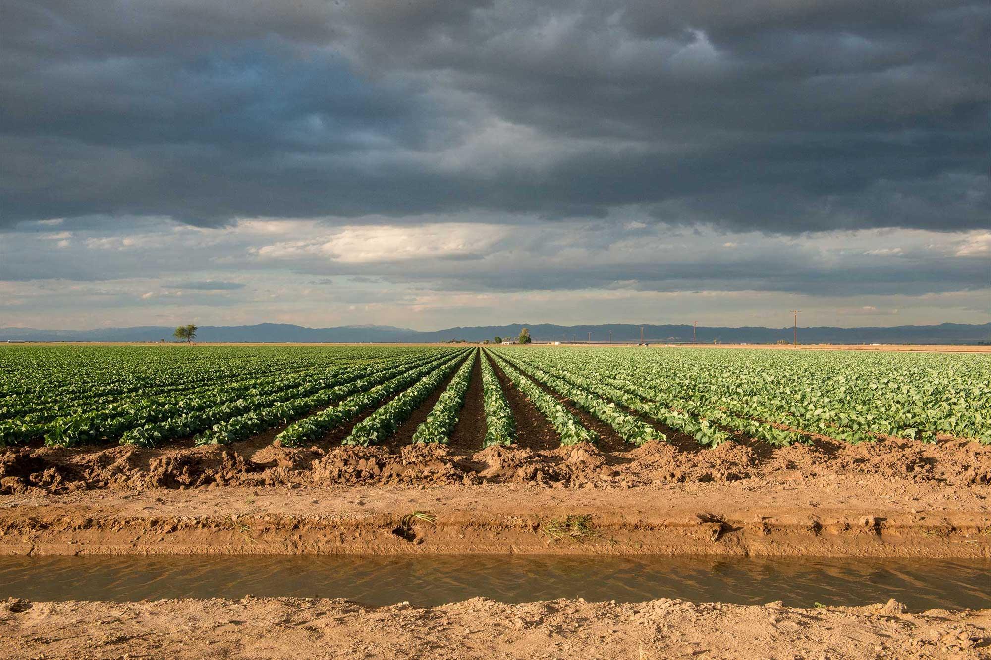 photo - Agriculture Field in Brawley, California - Pixel CA DWR