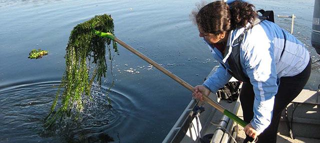 photo - Brazilian Waterweed Delta