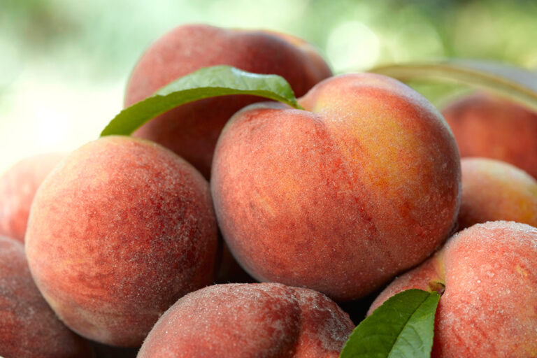 Photo of bunch of peaches