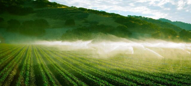 photo - California Vegetable Farm Using Irrigation