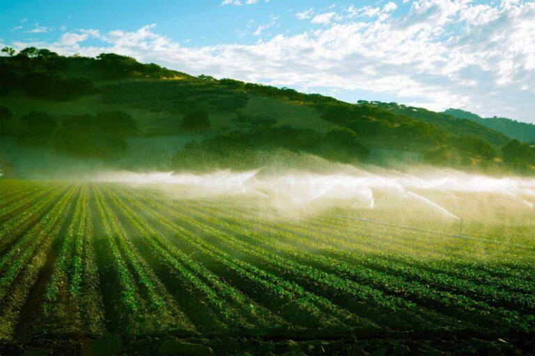 photo - California Vegetable Farm Using Irrigation