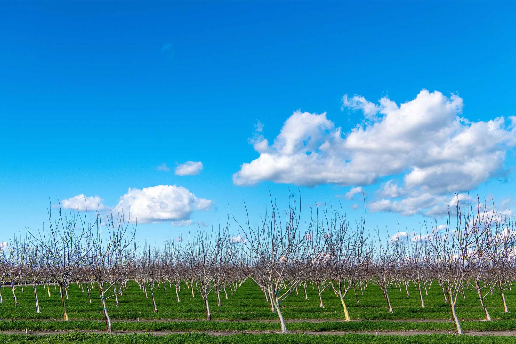 photo - Dormant Walnut Orchard in Lodi, California-pixel-ca-dwr-FL_Delta-3954_02_22_2019