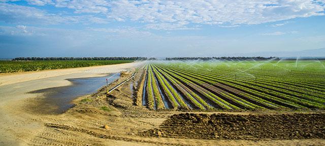 photo - Farm in the Central Valley, California