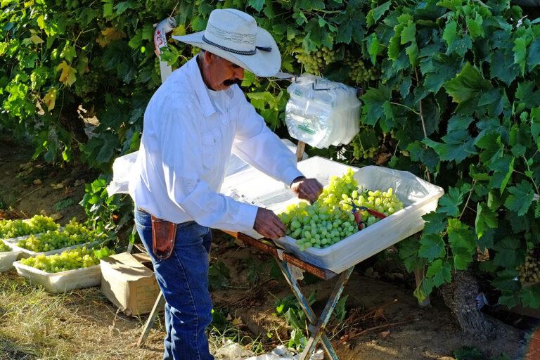 photo - Farmer in San Joaquin Valley