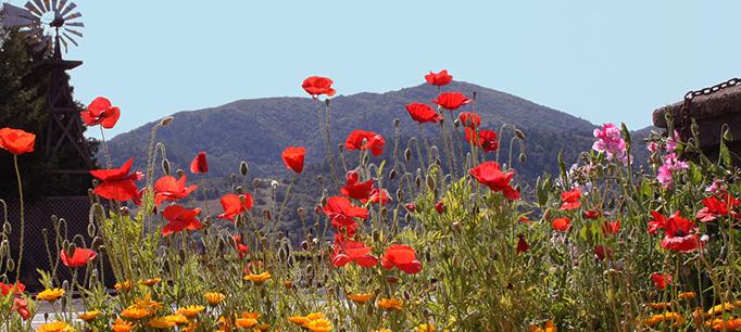 Flowers Mountain California