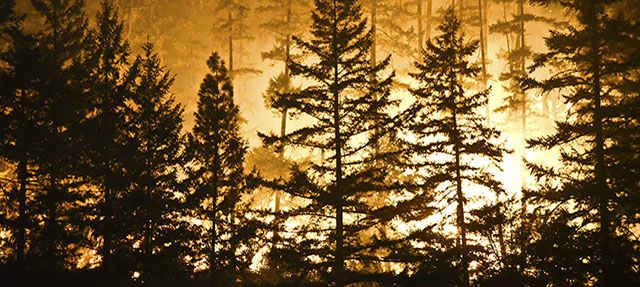 photo - forest and flames