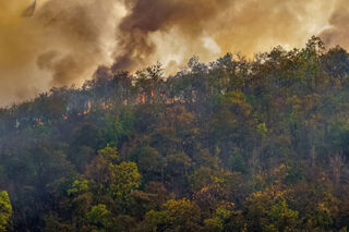 photo - Forest Fire