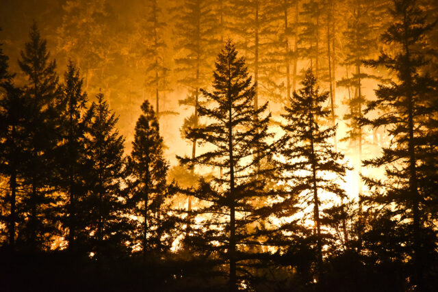photo - Forest Fire Flames