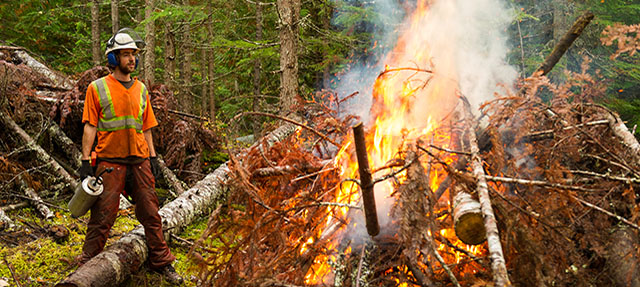 photo - Forestry Worker Performing a Controlled Burn