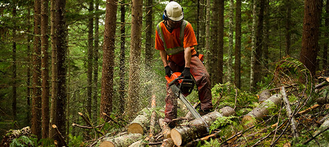 photo - Forestry Worker Thinning a Forest To Prevent Large Forest Fires