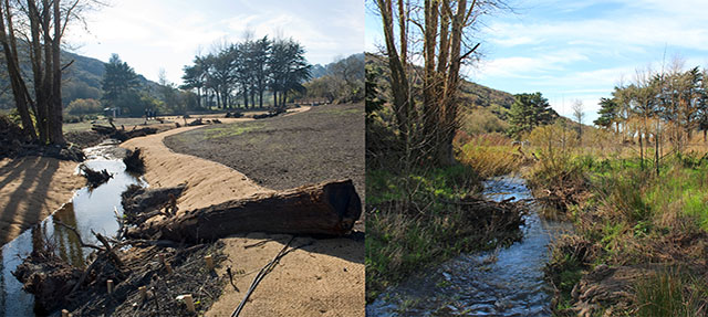 photo - Green Gulch Zen Center Restoration Project, from Accelerating Restoration Program