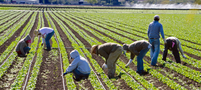 Immigrant Farmworkers