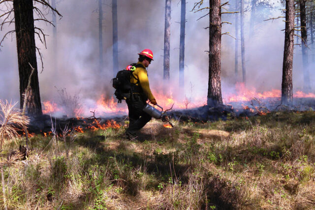 photo - prescribed forest fire