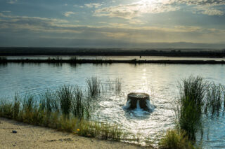 photo - Recharge Pond