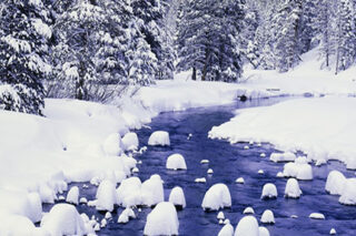 photo - Snow Covered Forest Along the Truckee River at Lake Tahoe,California