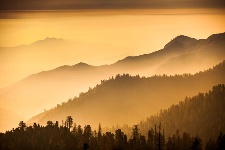 photo - Trees and Mist in Stanislaus National Forest