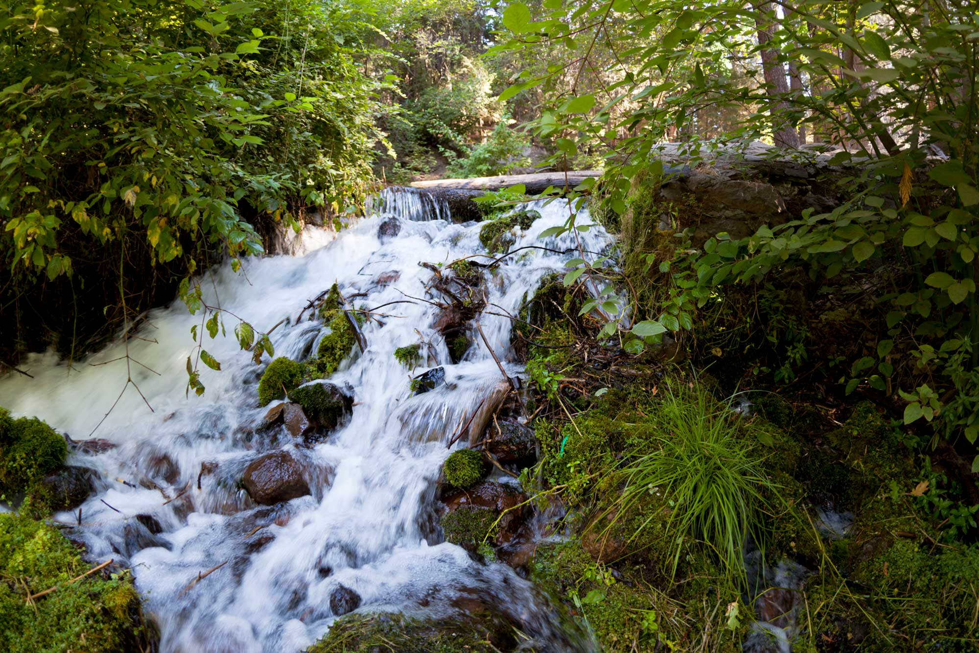 How Water Agencies Could Catalyze Headwater Forest Management - Public Policy Institute of California