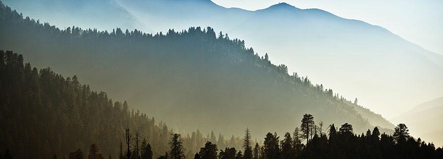 photo - Mist on Headwater Forest