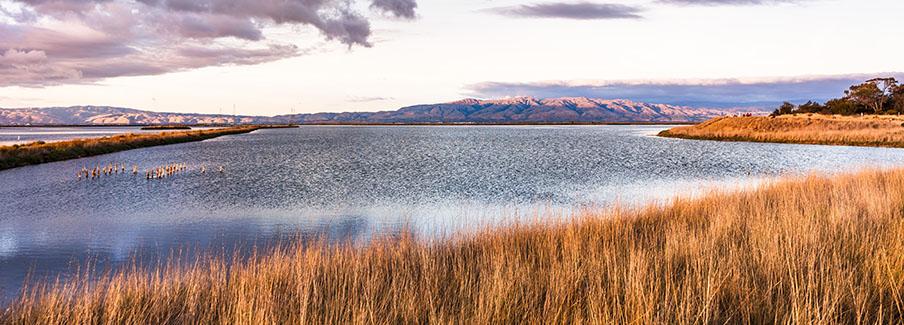 photo - Wetlands in Mountain View, California