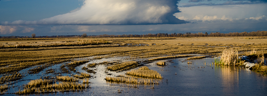 photo - Sacramento-San Joaquin Delta