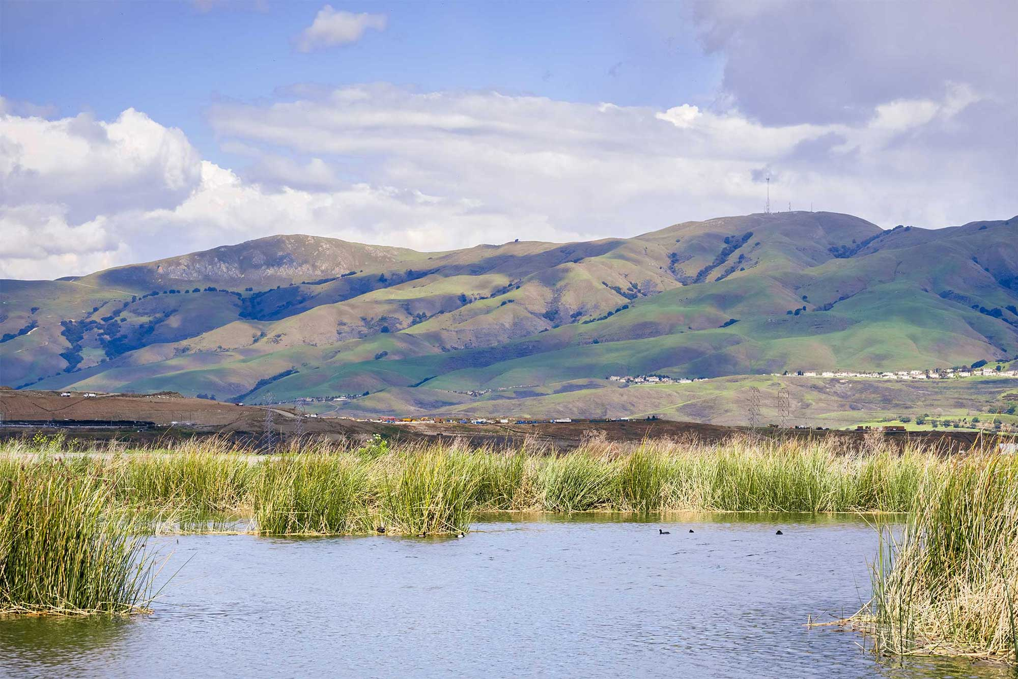 photo - Wetlands and the Diablo Range Mountains in the background, in San Jose, California