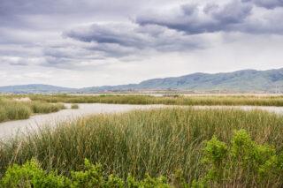 photo - Wetlands in Alviso Marsh