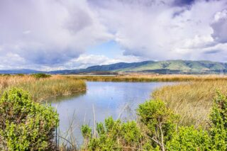 photo - Wetlands on a Stormy Day