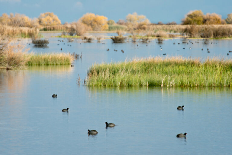 photo - Wildlife Refuge with Birds