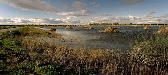 photo - Yolo Wetlands
