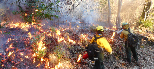 photo - Yurok controlled fire