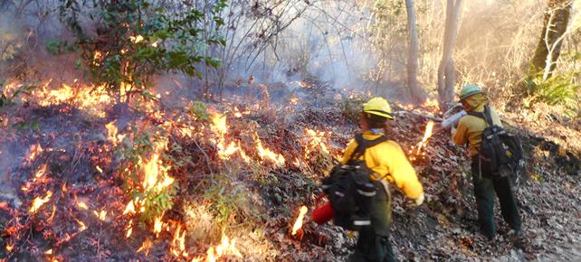 photo - Yurok controlled fire